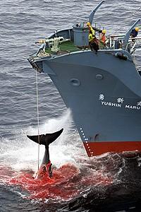 Whale Tale of Hideous Woe